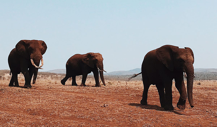 Safari dans la région de Mkuze en Afrique du Sud